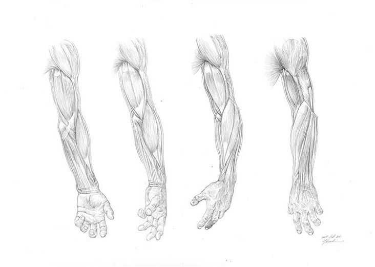 Dessiner le squelette et les muscles du bras b0de03df3ac