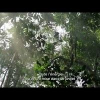 #Nature #Featurette Plongeon en forêt VOST