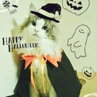 #Cosplay #Chat #Halloween déguisement #Fête #Insolite