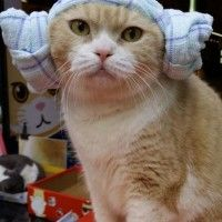 Cosplay pas cher pour chat Princesse Leia Star Wars