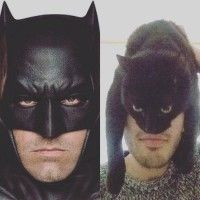 I am #Batman #Parodie avec un #Chat #Humour #DcComics