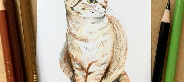 dessiner-chat-crayons-couleurs