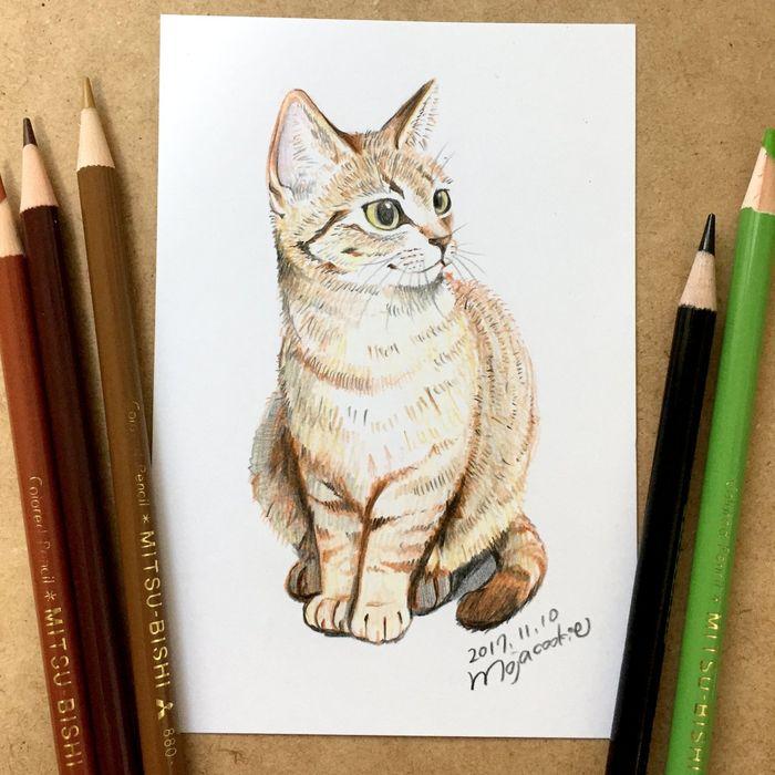 Dessiner Un Chat Aux Crayons De Couleurs